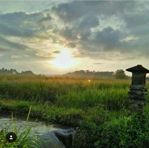 sunrise at Tista's ricefield